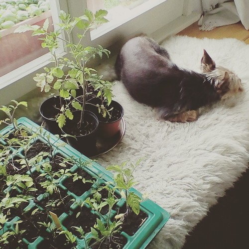 Luna snuggled with plants