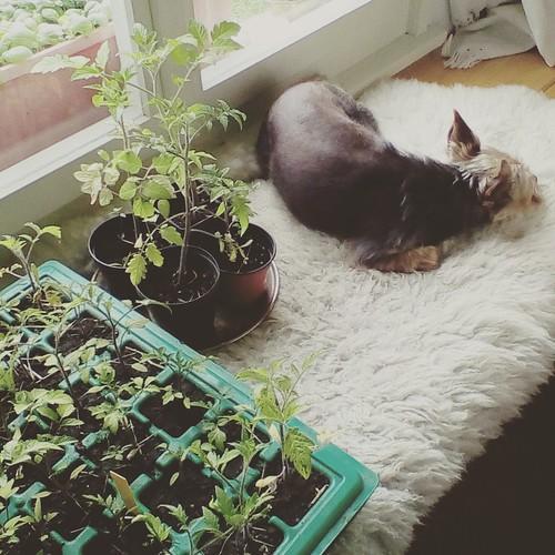 Luna snuggled with plants