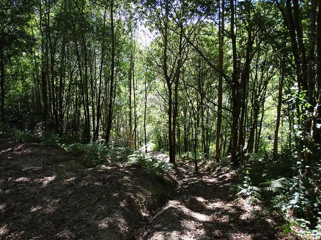 Camino en la ruta SM.08 Ambalasaugas - As Pías