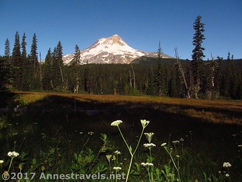 Wildflowers and Mt. Hood in Elk Meadows, Mount Hood National Forest, Oregon
