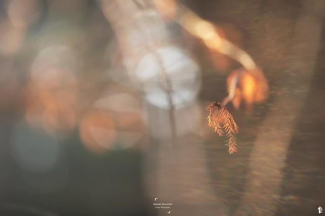 sunlight cypress photography