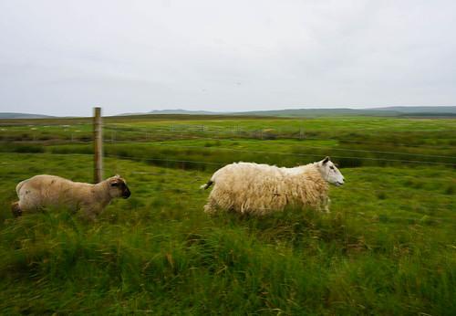 Scotland-8.jpg