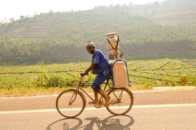 Transporting Milk on a Bicycle in Rwanda