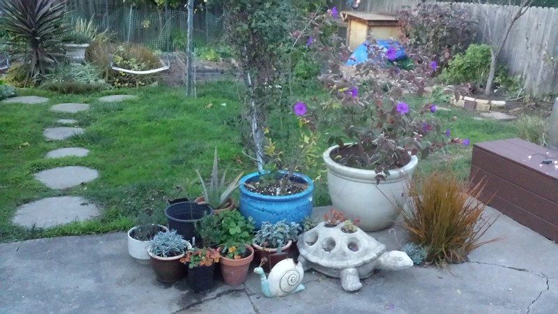 Re-potted patio herbs