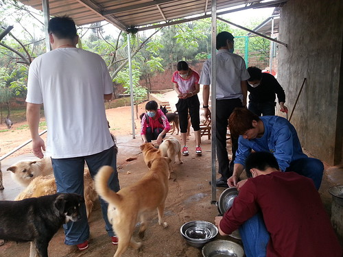 Preparing meals for dogs at NSAPA's sanctuary