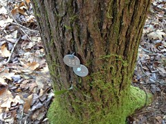 Hemlock Treatment Tags
