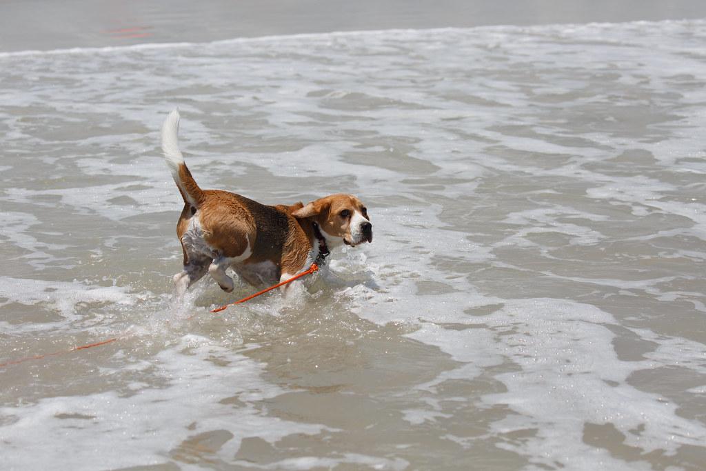Pet Friendly Beach Rentals In Naples Fl