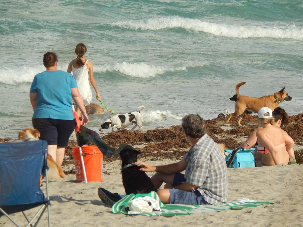 Hollywood Fl Dog Friendly Beach
