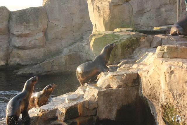 Besuch Zoo am Meer 29.12.201642