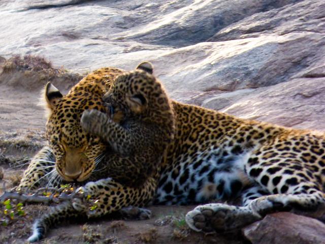Jordan and Marisa safari 893.jpg