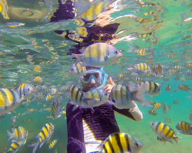 Haciendo snorkel en las islas phi phi de Tailandia