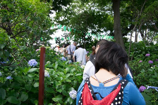 あじさい祭り@白山神社