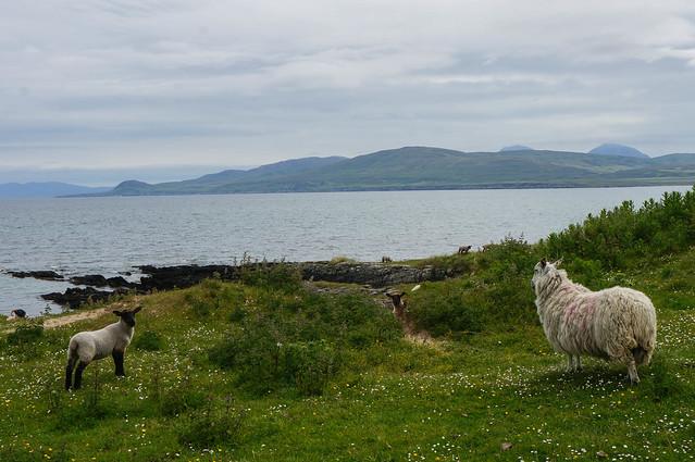 Scotland-49.jpg