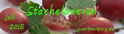 Garten-Koch-Event Juli: Stachelbeeren