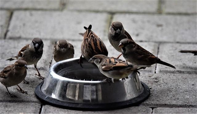 Sparrows16.12 (35)