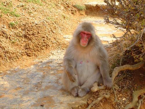Iwatayama Monkey Park, Arashiyama, Kyoto  Blake Brunner  Flickr