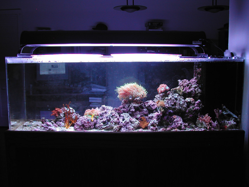 100 Gallon Reef Aquarium Taking A Picture Of My Whole