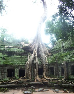 Ta Prohm Temple | by Haydn Blackey