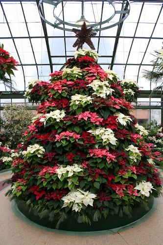 Poinsettia Christmas Tree Decorations Uk