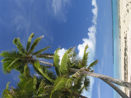 Another coconut palm, Aitutaki | by ScenicViews