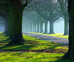The Avenue trees in mists and sun | by algo