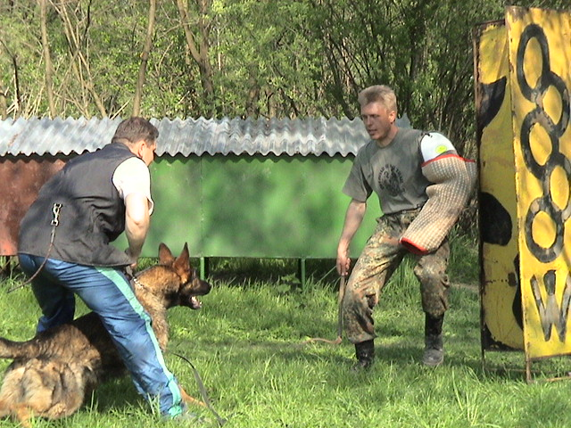 Personal Protection Dog Training Texas