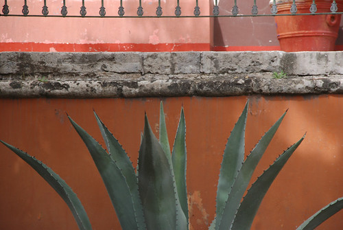 Agave against an orange wall in Aguascalientes, Mexico
