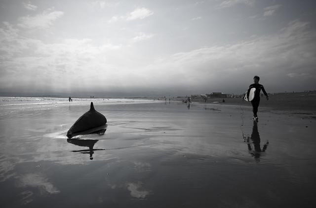 砂の海豚(Dolphin of sand)