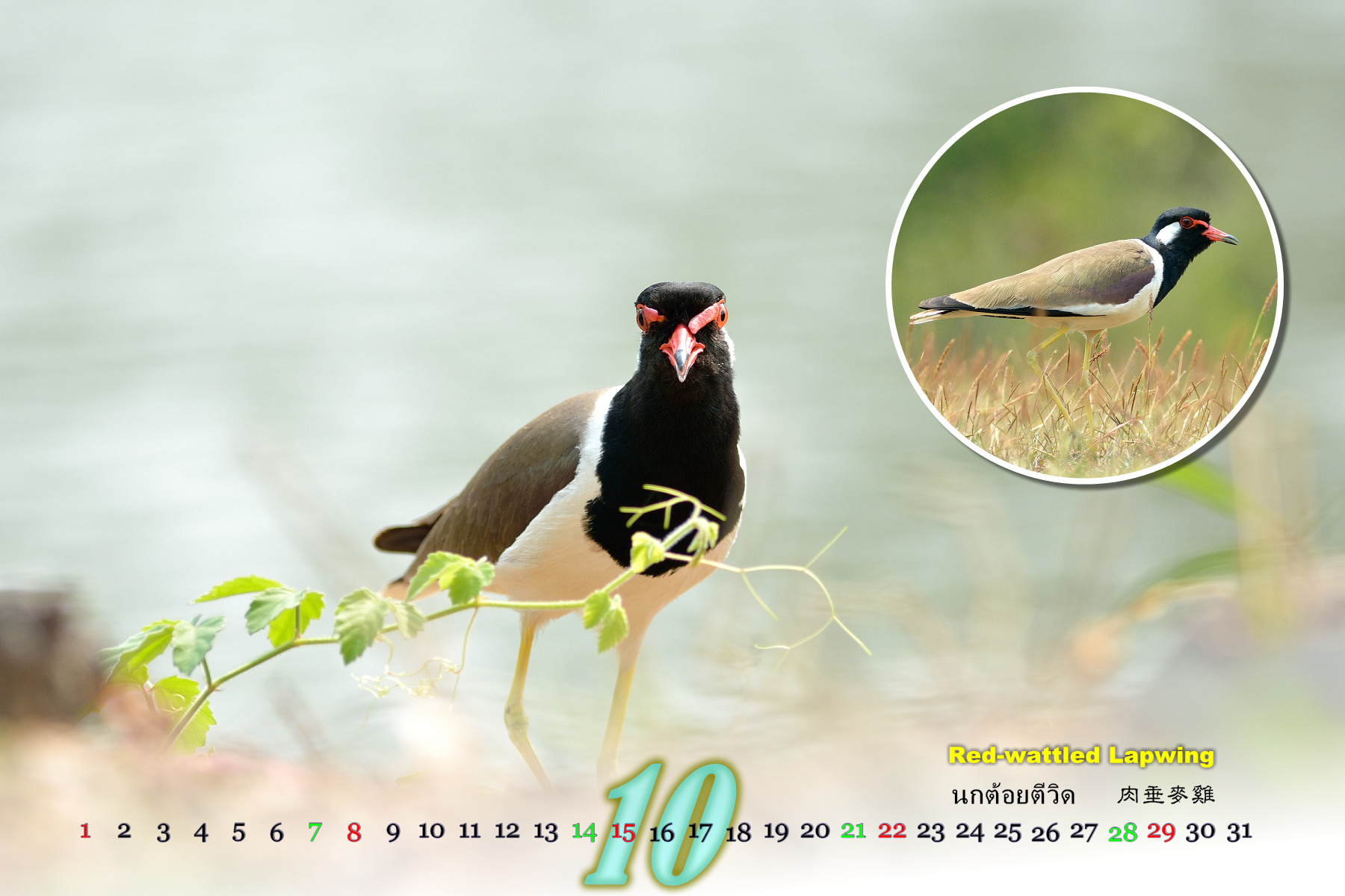 Thai Bird Calendar 2017_10