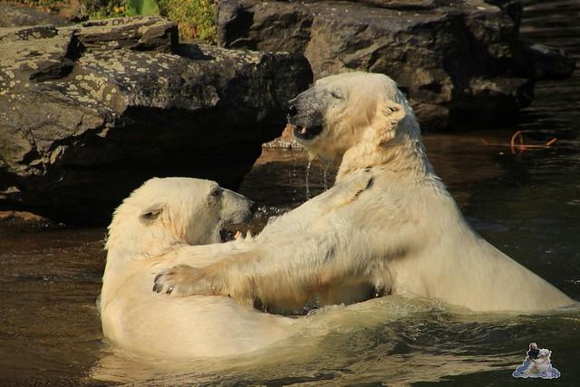 Tierpark Berlin 13.06.2015   34