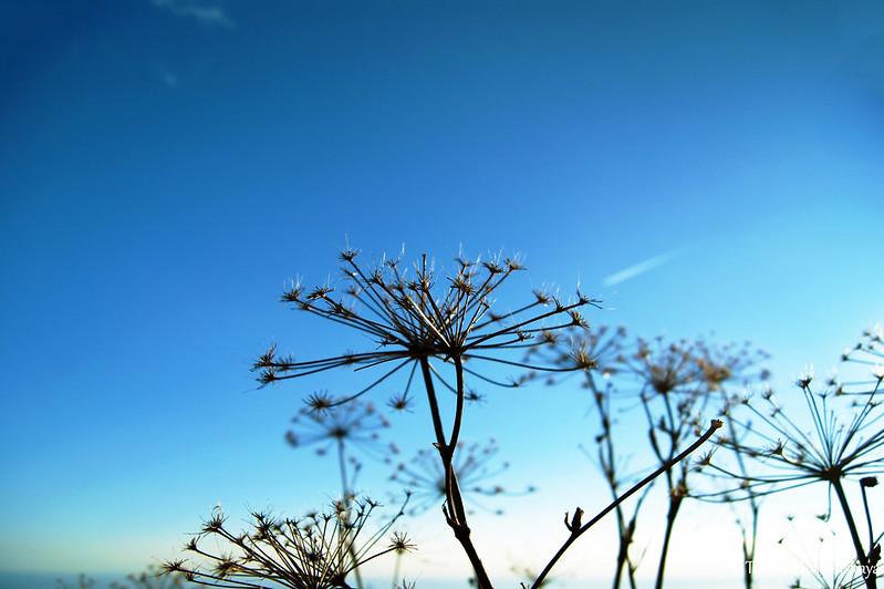 Сухие травы на фоне неба