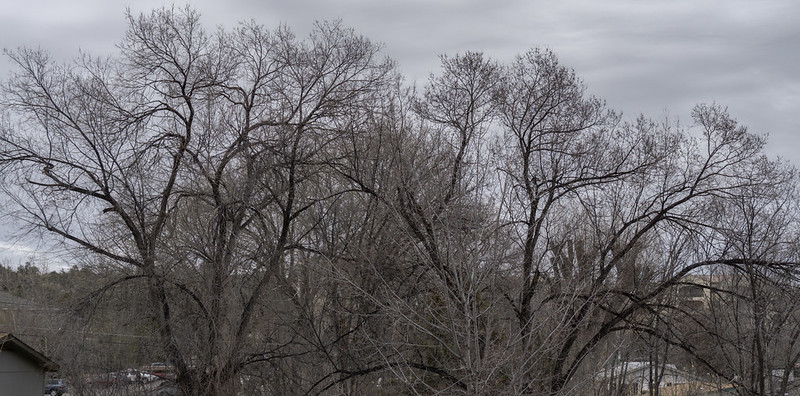 Gray Morning Leafless Trees