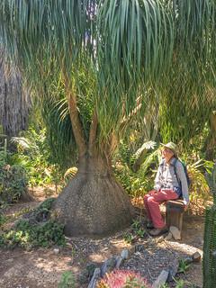 Cacti & Succulent Garden