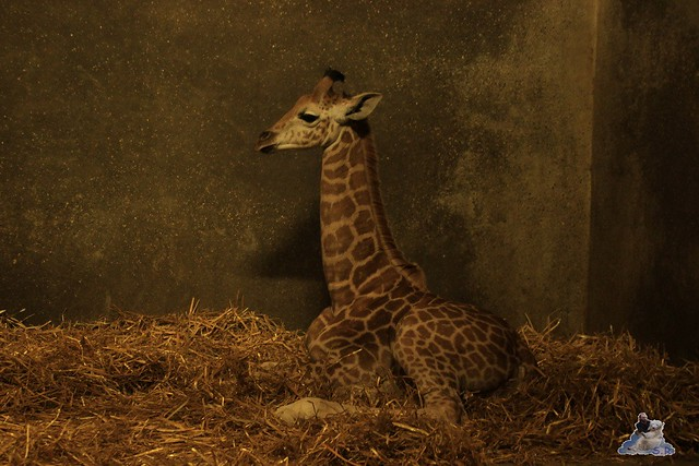 Tierpark Hagenbeck Dschungelnacht 06.05.2015   190