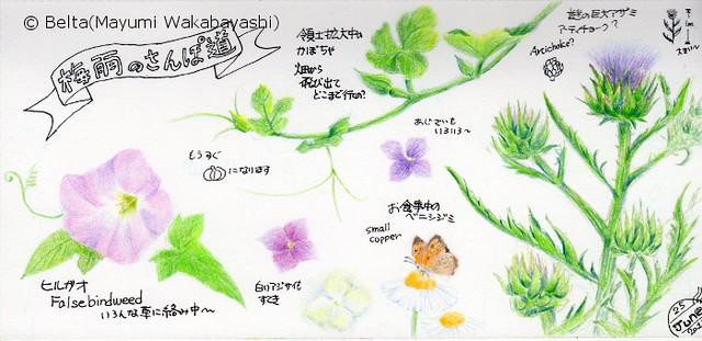 2015_06_25_sanpo_01