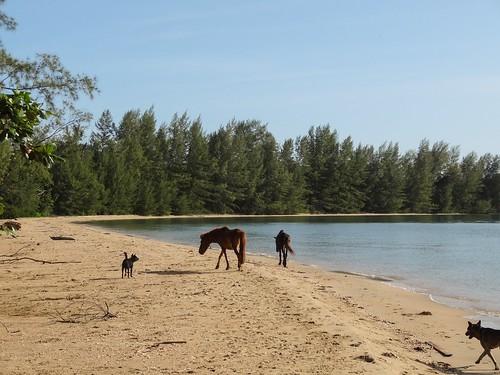beach ponies