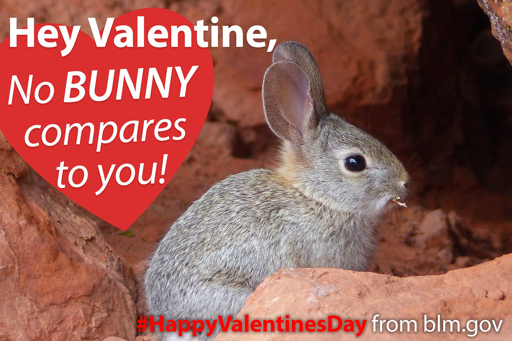 "happy valentine's day! bunny valentine | ""hey valentine, no … | flickr, Ideas"
