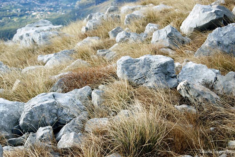 Камни и трава