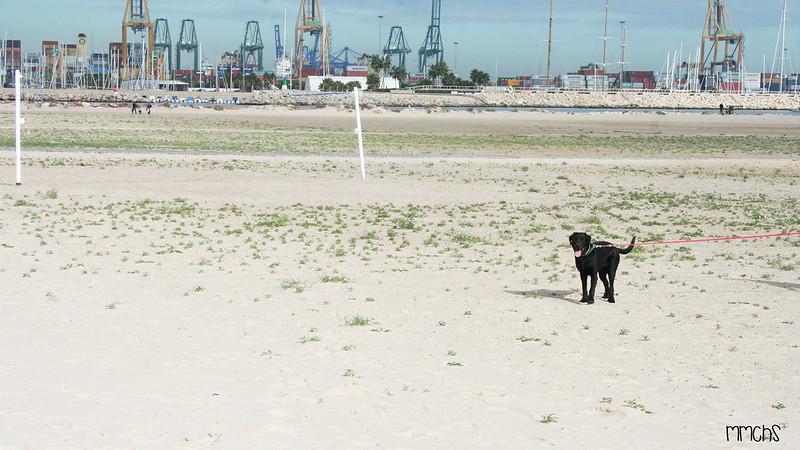 playa de perros en Pinedo Valencia