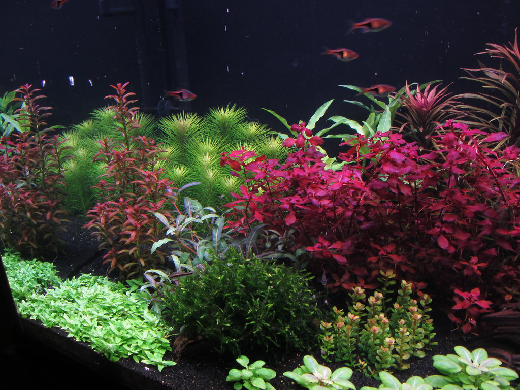 120 gal dutchy freestyle now with 50 more dutch the planted tank forum. Black Bedroom Furniture Sets. Home Design Ideas