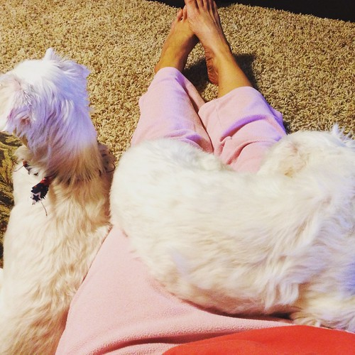 Pink n Pups