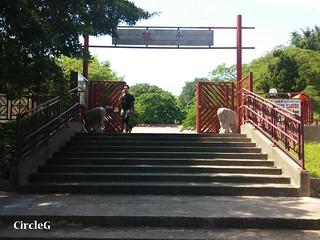 CIRCLEG 大澳一天遊 東涌MTR 轉11旅遊巴 遊記 (14)