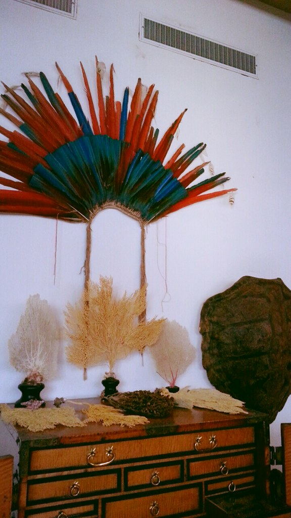 Rembrandt Exhibition Shell : Rembrandt s collection of feathers this room prominently