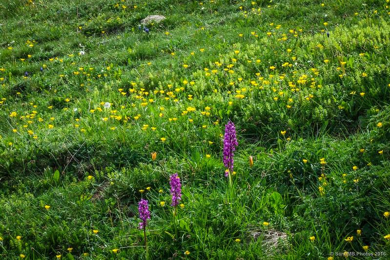 Flores en el Turó de l'Home.