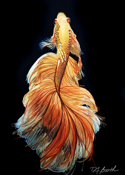 Mixed Media Quilling - Betta Beauty