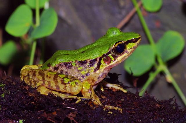 信賢瀑布的蛙蛙