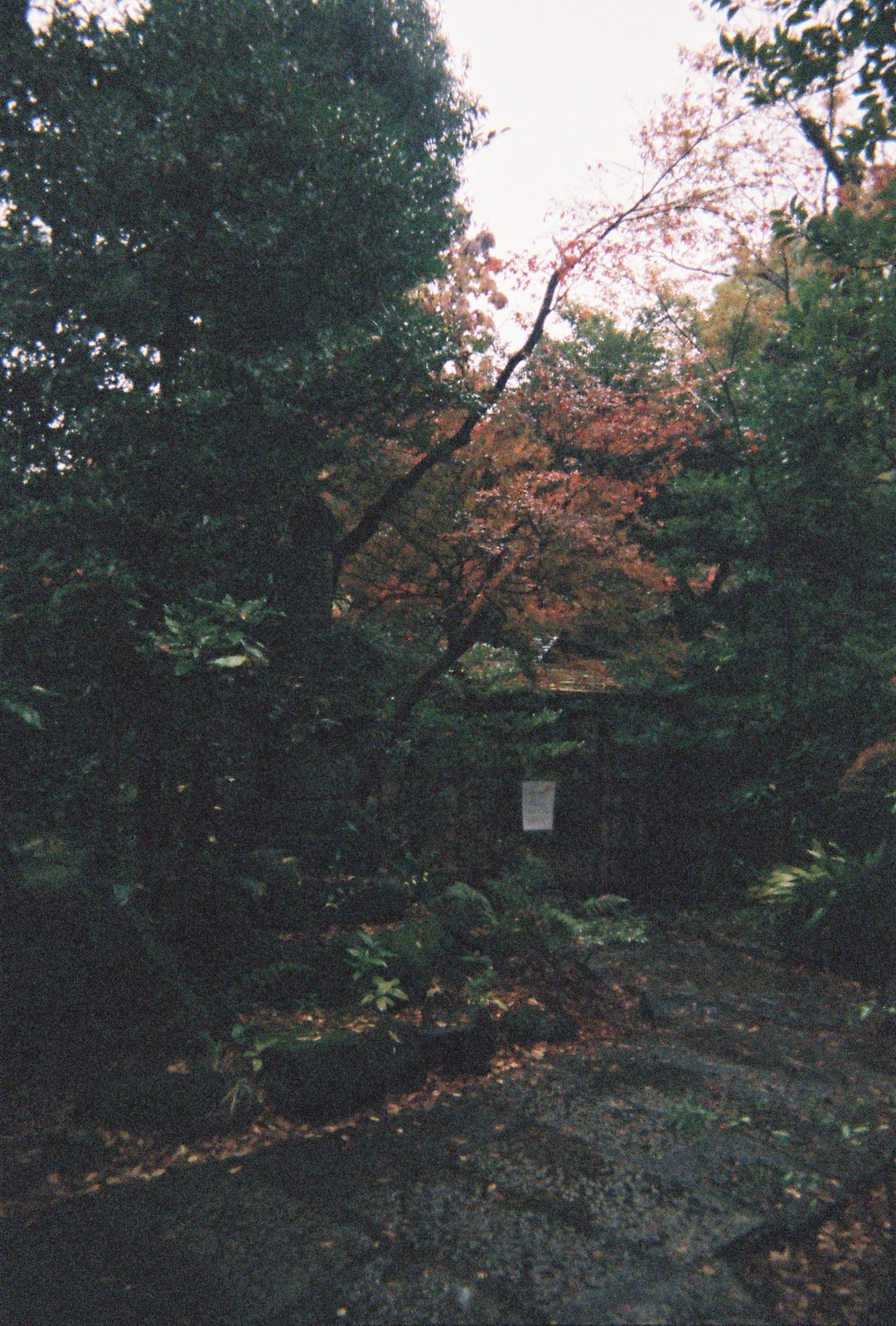 Tokyo, Japan, Asia, Travel, Disposable Camera, Film