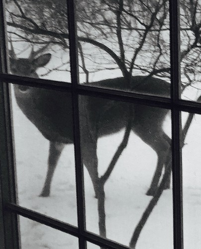 At Home: Deer with Antlers!