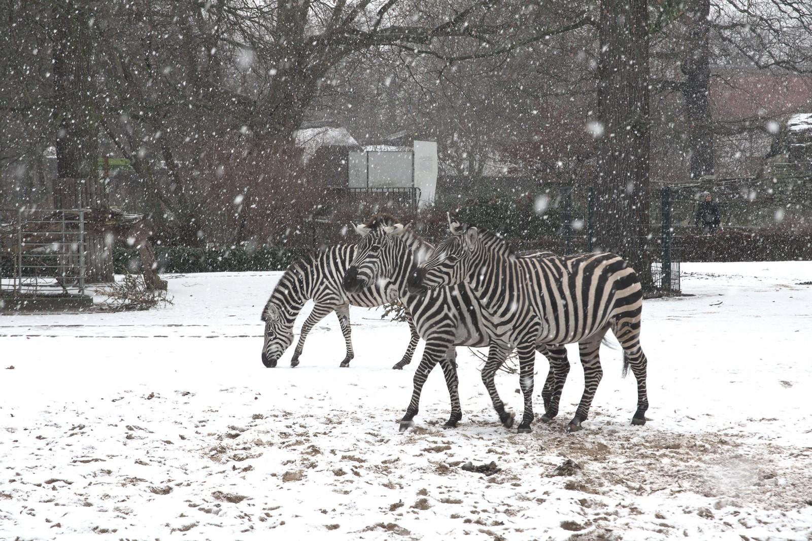 Berlin (zoological garden) | by Hg T