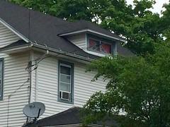 Confederate flag, Flemington, New Jersey